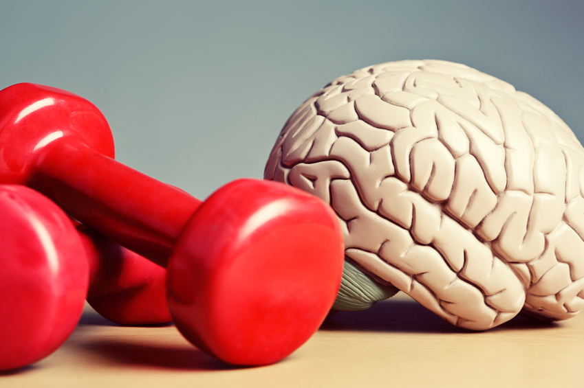 red dumbbells sitting next to a model brain
